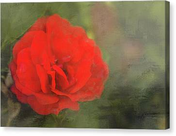 Red Rose Canvas Print by Andrea Kappler