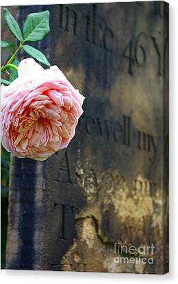 Rose At The Grave Canvas Print