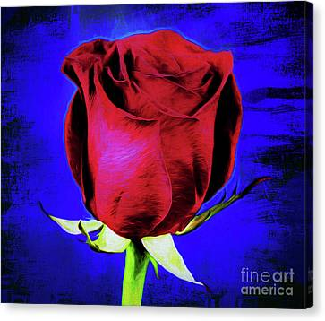 Rose - Beauty And Love  Canvas Print
