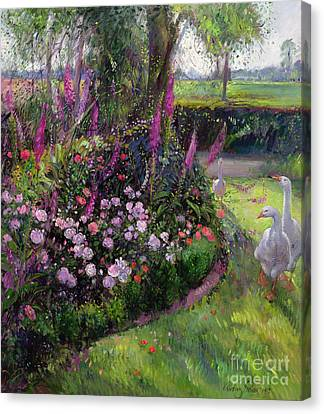 Rose Bed And Geese Canvas Print