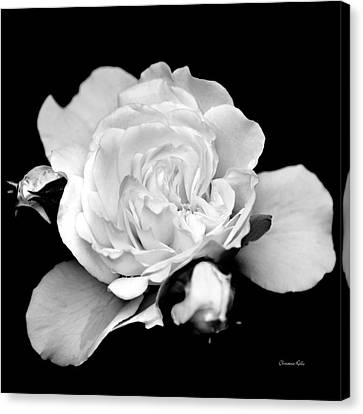 Canvas Print featuring the photograph Rose Black And White by Christina Rollo