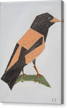 Rose-coloured Starling Canvas Print