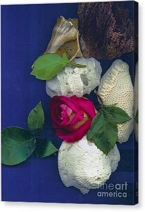 Rose Corals Shell Canvas Print by Leonor Shuber