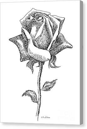 Rose Drawings Black-white 5 Canvas Print