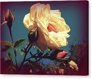 Rose Facing The Sun Canvas Print by Susan Lafleur