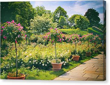 Rose Garden Allee II Canvas Print by Jessica Jenney