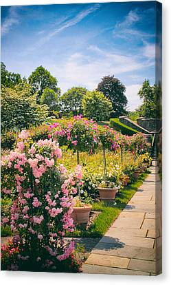 Rose Garden Allee  Canvas Print by Jessica Jenney