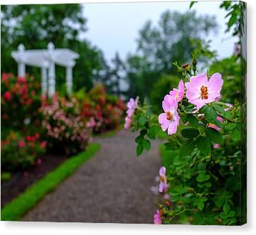 Rose Garden Gateway Canvas Print by Chris Bordeleau