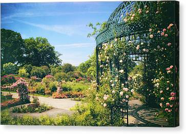 Rose Garden Light Canvas Print by Jessica Jenney