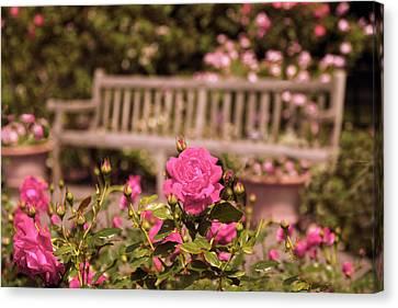 Rose Garden Rest Canvas Print by Jessica Jenney