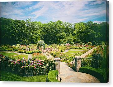 Rose Garden Views Canvas Print by Jessica Jenney