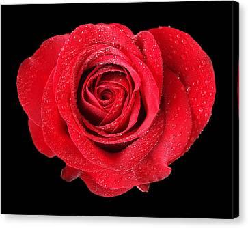 Rose Hearts Canvas Print by Gill Billington