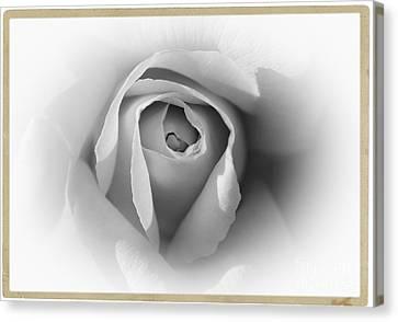 Rose - High Key Canvas Print by Stefano Senise