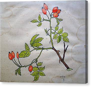 Rose Hip Canvas Print