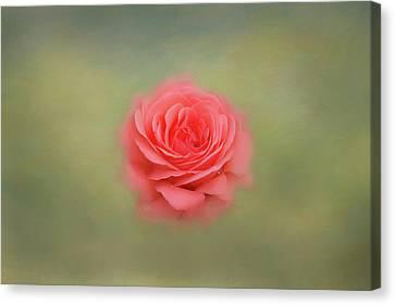 Canvas Print - Rose Impressions by Kim Hojnacki