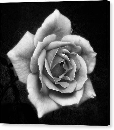 Rose In Mono. #flower #flowers Canvas Print by John Edwards