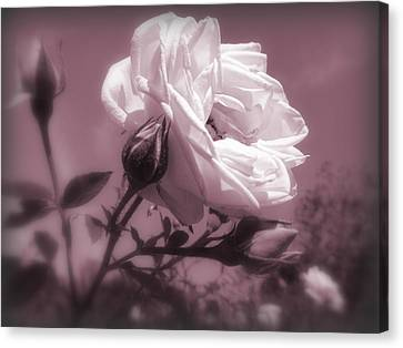 Rose In Rose Canvas Print