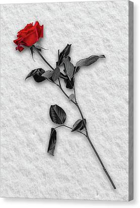 Rose In Snow Canvas Print by Wim Lanclus