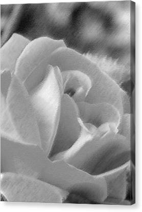 Rose Canvas Print by John Bradburn