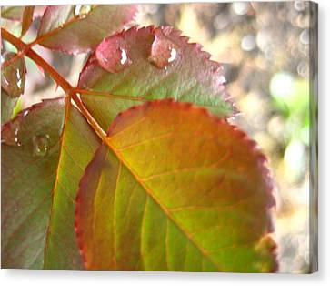Rose Leaves Canvas Print by Shirley Sirois