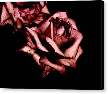 Rose Canvas Print by Mohammed Nasir