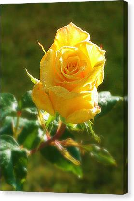 Rose Of Friendship Canvas Print by Mg Blackstock