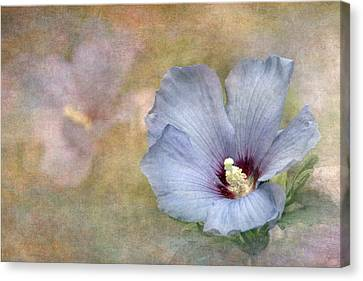 Rose Of Sharon - Hibiscus Canvas Print by Angie Vogel