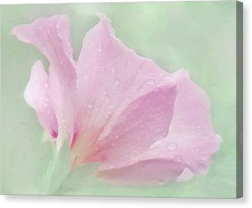 Rose Of Sharon....after The Rain Canvas Print by Hal Halli