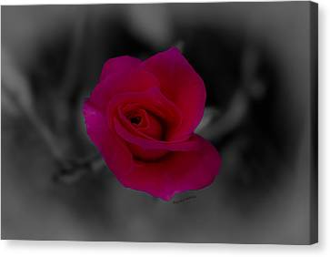 Rose Of Solitude Canvas Print by DigiArt Diaries by Vicky B Fuller