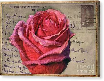 Rose On Vintage 1950's Post Card Canvas Print
