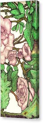 Rose Panel No 2 Canvas Print by Edward Ruth