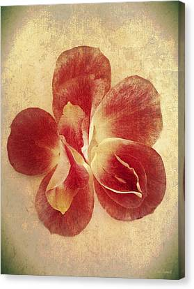 Canvas Print featuring the photograph Rose Petals by Linda Sannuti