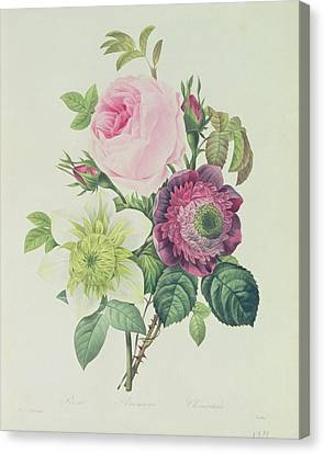 Rose Canvas Print by Pierre Joseph Redoute