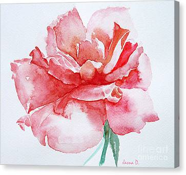 Rose Pink Canvas Print by Jasna Dragun