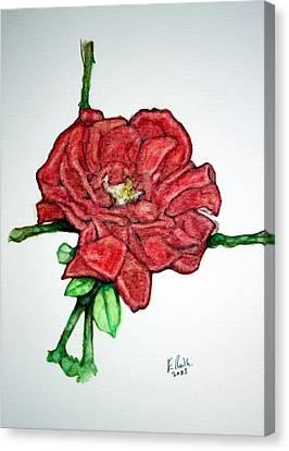 Rose Study No 1 Canvas Print by Edward Ruth