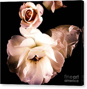 Canvas Print featuring the photograph Rose by Vanessa Palomino