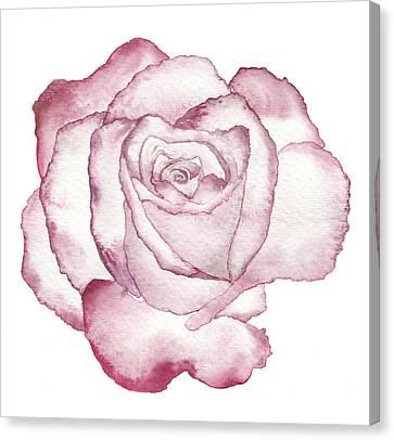 Rose Canvas Print by Varpu Kronholm