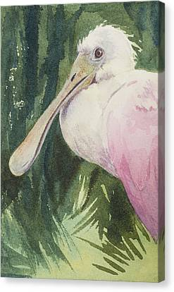 Spoonbill Canvas Print - Roseate Spoonbill by Kris Parins