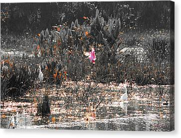 Roseate Spoonbill Select Color Canvas Print by Ken Figurski