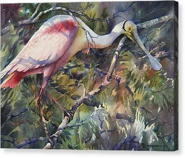 Roseate Spoonbill Canvas Print by Sue Zimmermann
