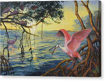 Roseate Spoonbills Among The Mangroves Canvas Print by Dianna  Willman
