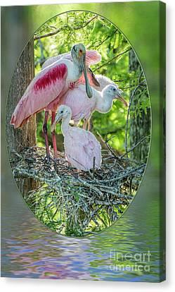 Roseate Spoonbills In Evangeline Parish Louisiana Canvas Print