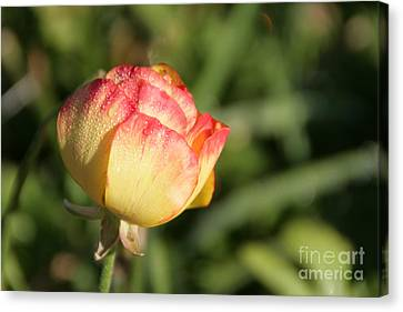 Rosebud Canvas Print by Andrea Jean