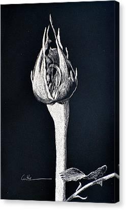 Rosebud Canvas Print by Diane Cutter