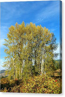 Rosehips And Cottonwoods Canvas Print