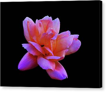 Canvas Print featuring the photograph Roseline by Mark Blauhoefer