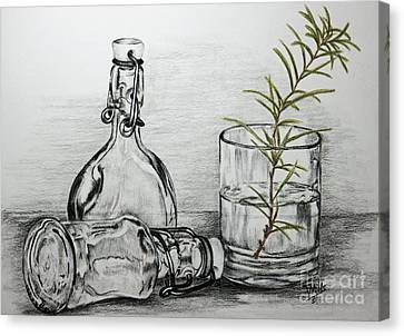 Rosemary Canvas Print by Terri Mills