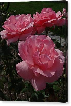 Flowerrs Canvas Print - Roses 1 by Deborah Smith