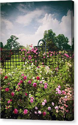 Roses Adorned Canvas Print