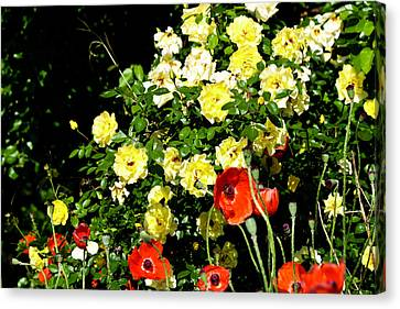 Roses And Poppies Canvas Print by Teresa Mucha